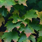 Leaf Creations