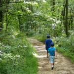Trail Games